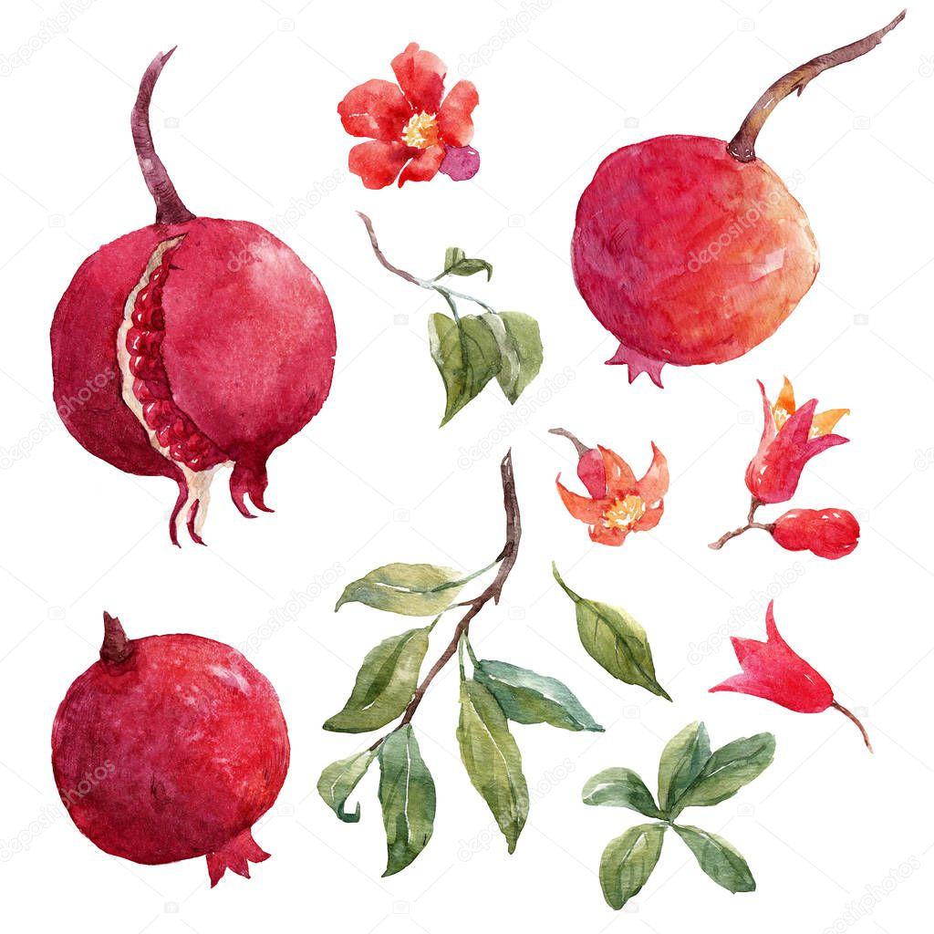 Pomegranate fruit set