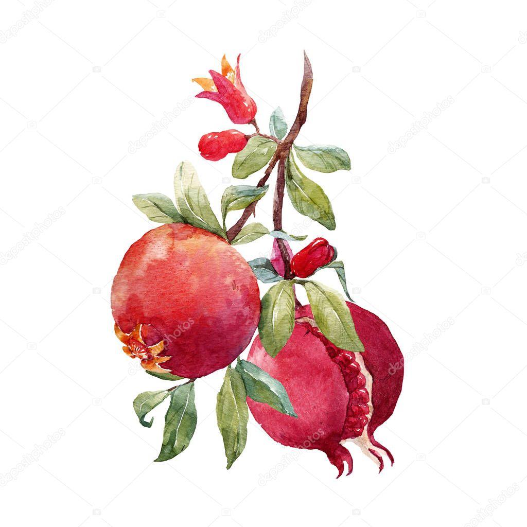 Pomegranate fruit branch