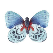 Sada akvarel motýli