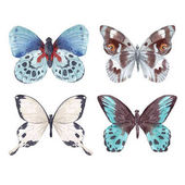 Photo Watercolor butterflies set