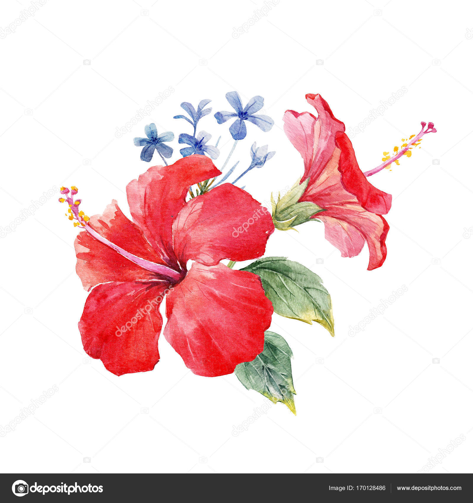 Watercolor hibiscus composition stock photo zeninaasya 170128486 beautiful tropical composition with watercolor hibiscus flowers photo by zeninaasya izmirmasajfo