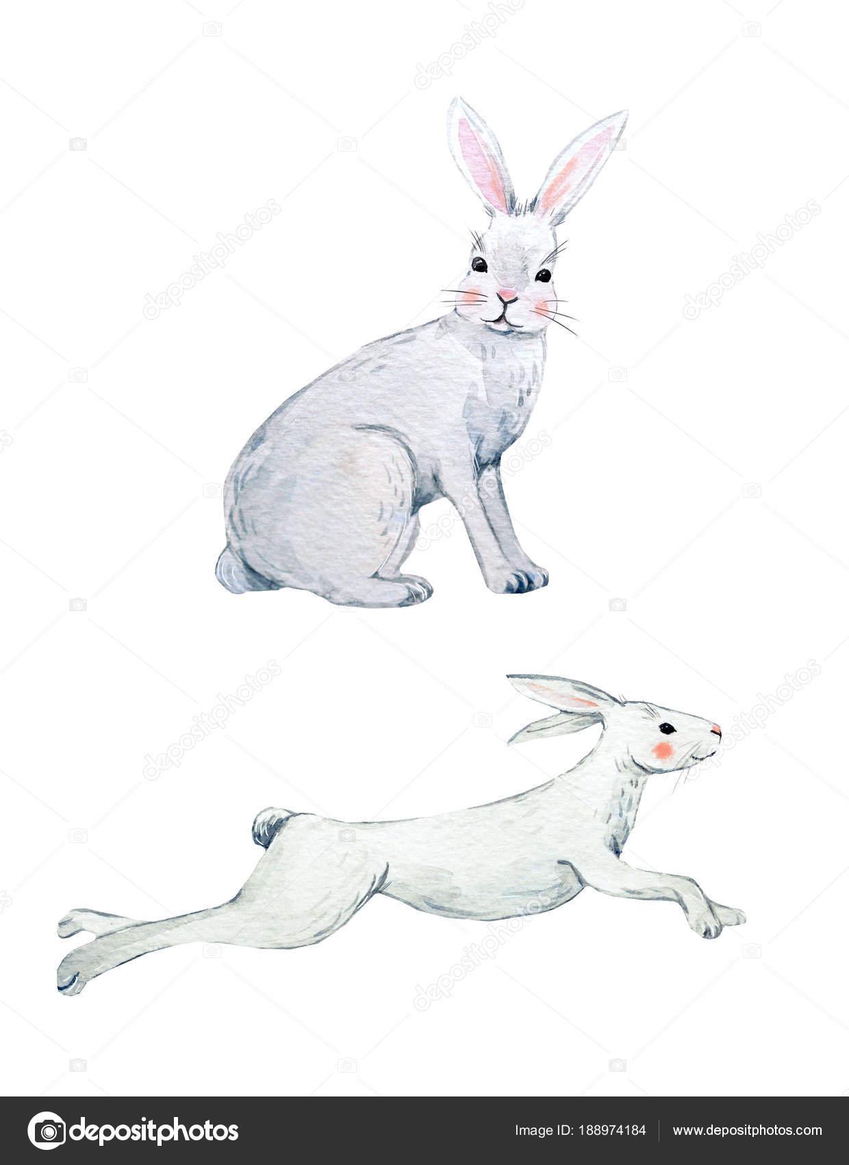 Großzügig Kaninchen Muskelanatomie Bilder - Menschliche Anatomie ...