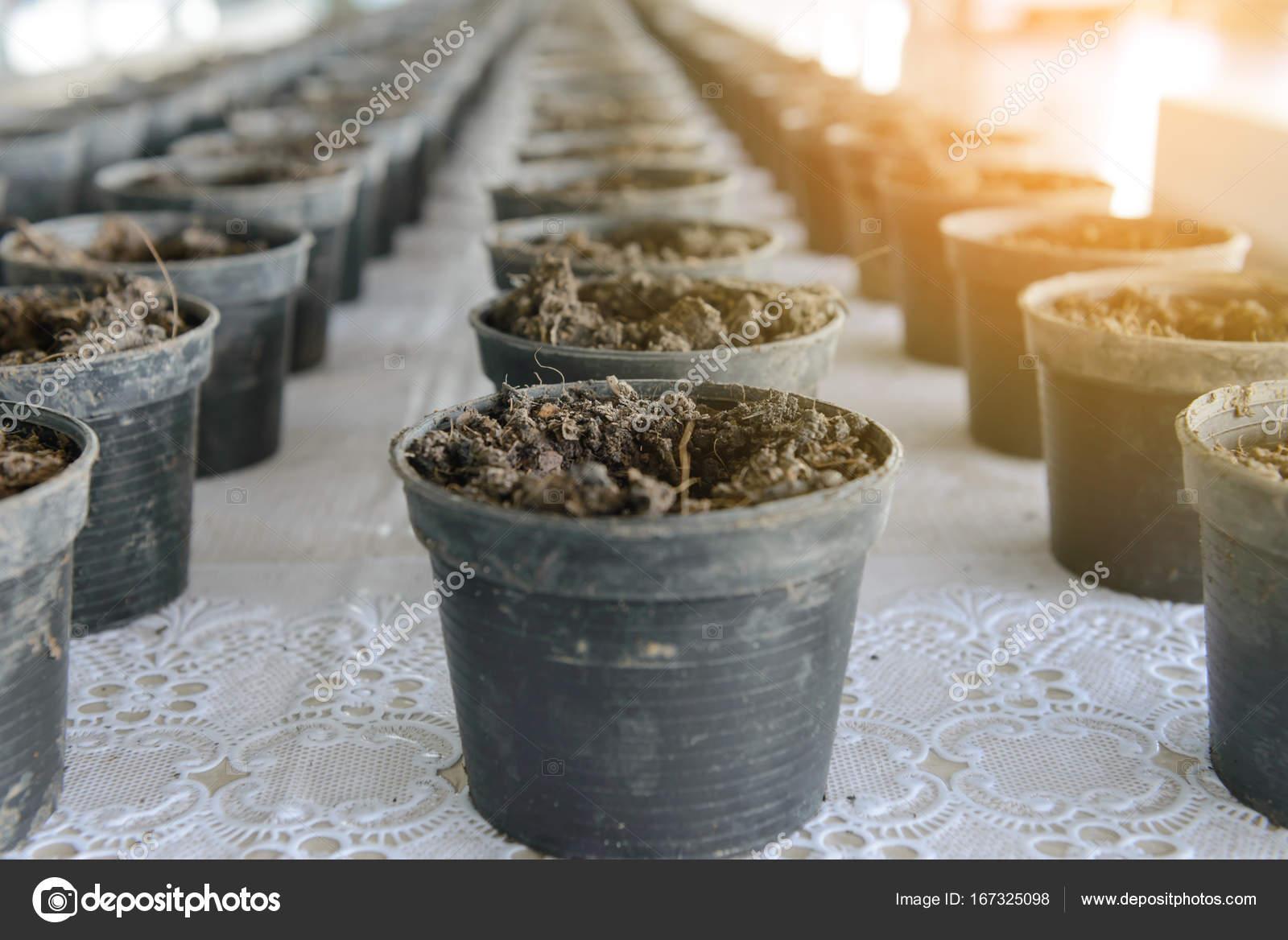 Bardziej Czarne Plastikowe Doniczki Z Przygotowaniem Gleby