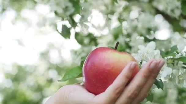 krásná dívka v šatech s apple na jabloně