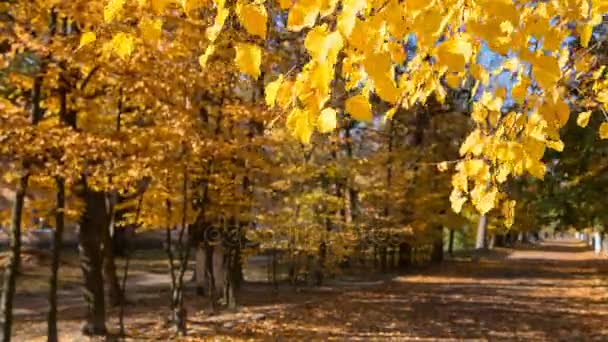 Podzimní krajina v městském parku
