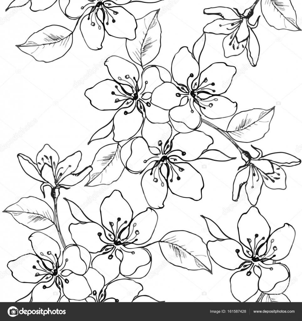 Dibujo De Las Manos Una Rama De Cerezos En Flor Pera Manzana
