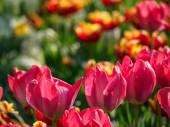 Tavasszal a német muensterland közelében, a város Borken