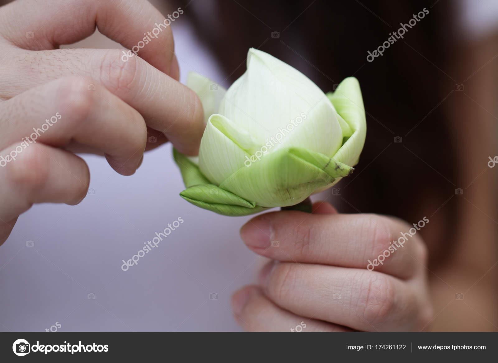 Lady Hands Folding Beautiful Green Organic Lotus Leaf Instruction