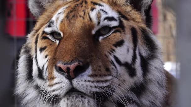 Zár-megjelöl kilátás-a tigris fejét. 4