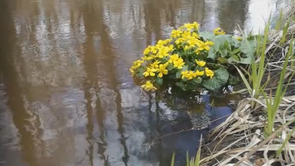 Flowers grow in spring water in the forest stock video makalex flowers grow in spring water in the forest stock video mightylinksfo