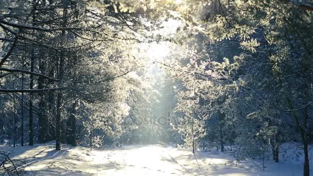 Bäume im Raureif gegen den blauen Himmel. Schneefall.