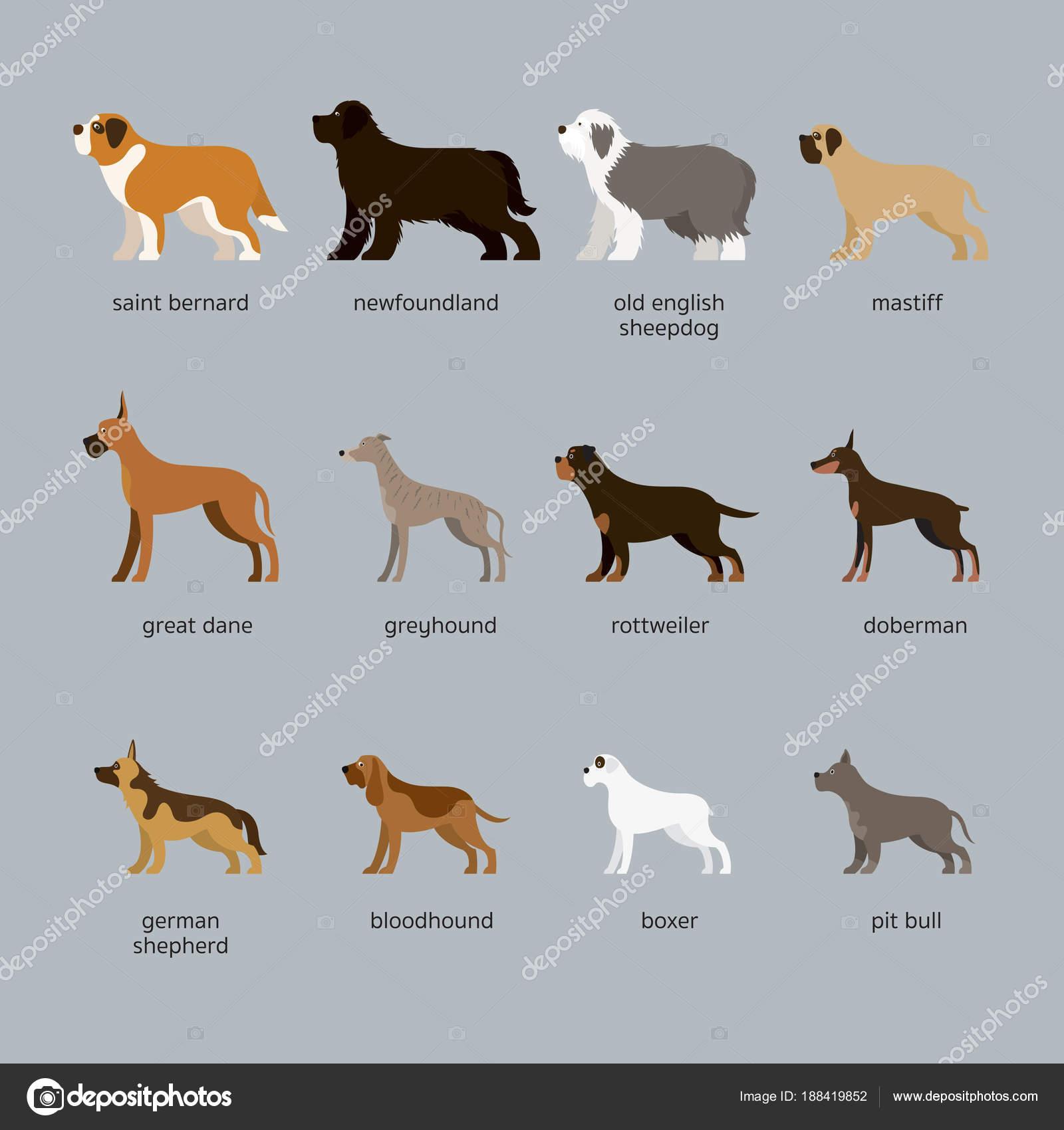 порода собак набор