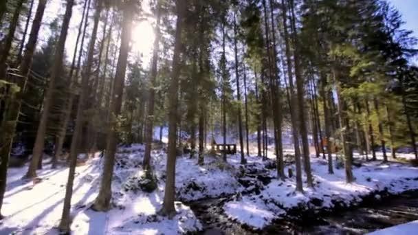 Zimní krajina s jedlí a stream za slunečného dne