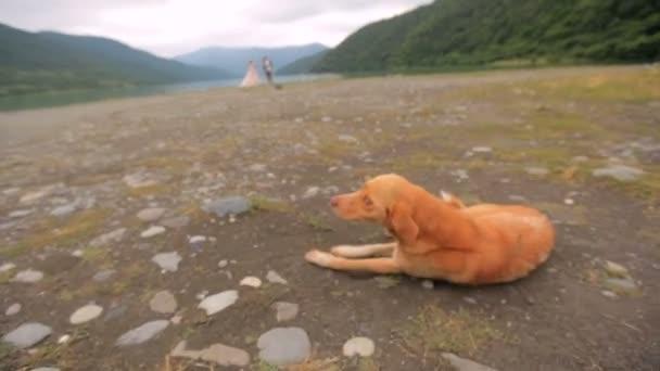 Roter Hund auf dem Hintergrund des Flusses und der Berge.