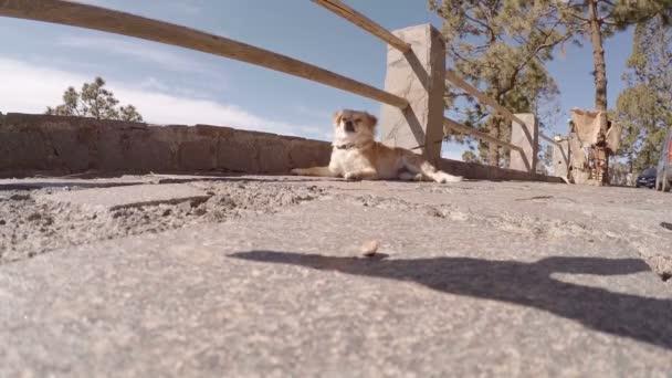 Malý pejsek čeká na svého majitele