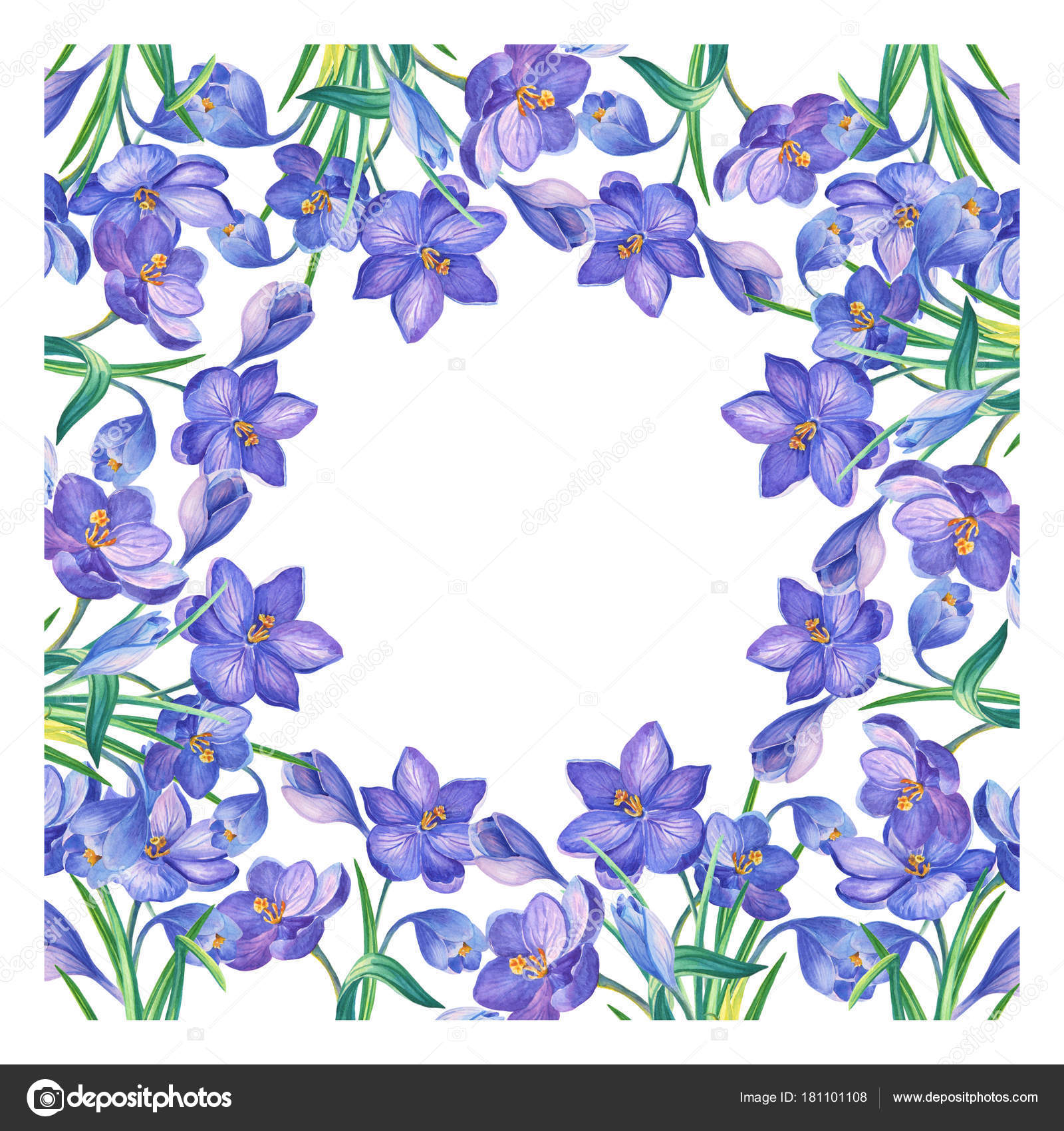 Frame watercolor illustration crocus saffron white background watercolor illustration with crocus or saffron on a white backgrounduquet of purple flowersn be used as greeting cards wedding invitations birthday izmirmasajfo