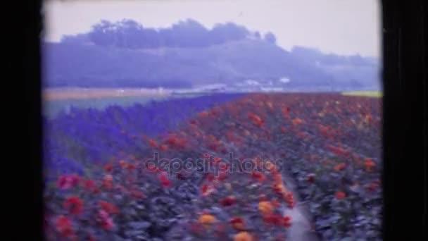 květinové plantáži s růží a levandule