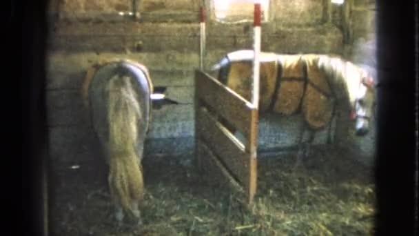 Dva koně ve stáji dechu seno