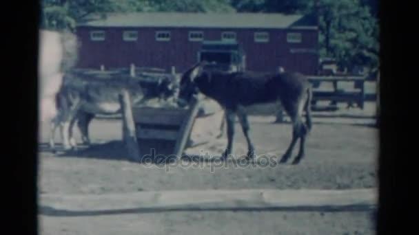 donkeys drink water