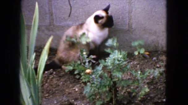 Macska ül növények