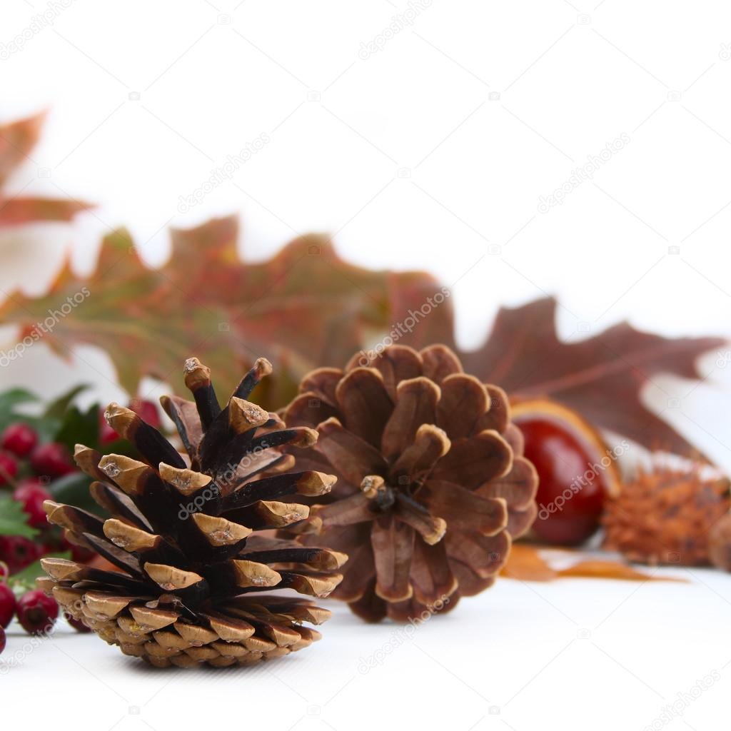 autumn background with cones