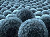Rakovinné buňky zblízka
