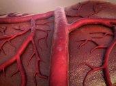 Fotografia sistema circolatorio umano