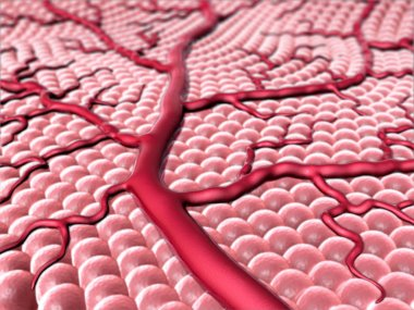 Capillary and cells