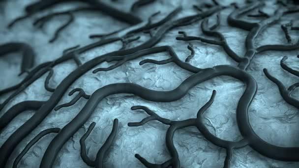 Kapilární trubička na mozek