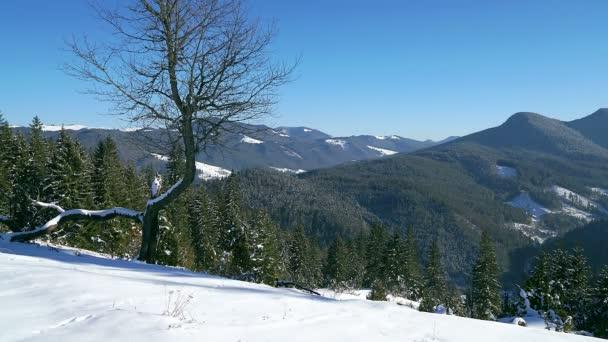 Baum im winterlichen Zeitraffer der Berge, einsamer Baum in den schneebedeckten Bergen, 4k-Zeitraffer im winterlichen Zeitraffer in den Karpaten, Bäume Schatten, die sich im winterlichen Zeitraffer über Schnee bewegen