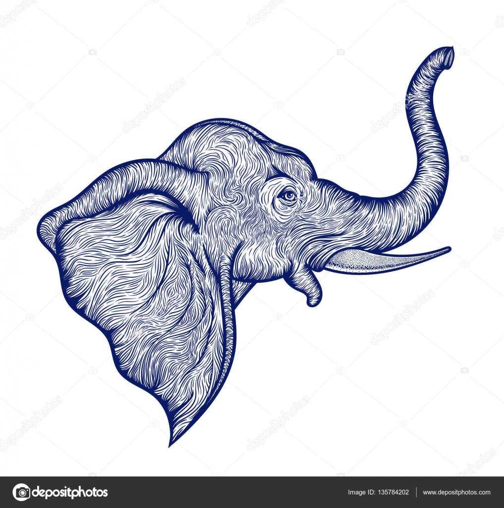 Testa di elefante in design profilo linea arte boho ...
