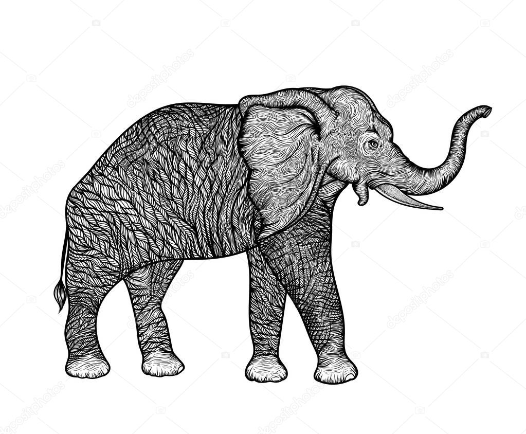 Elephant in profile line art boho design. Vector illustration