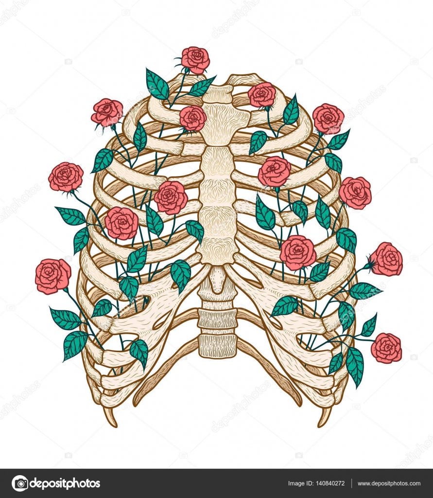 Ilustración de la caja torácica humana con rosas. Estilo de arte de ...