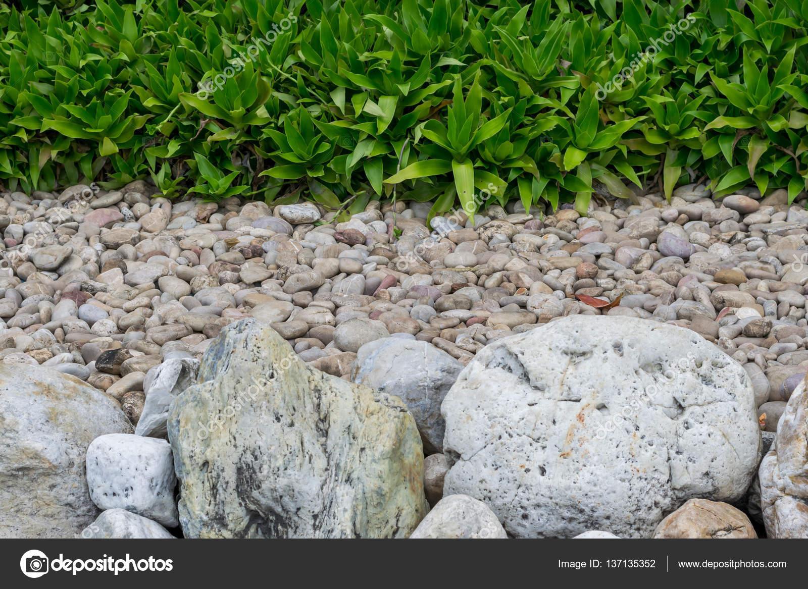 kies im garten, stein felsen, kies und pflanzen im garten — stockfoto, Design ideen