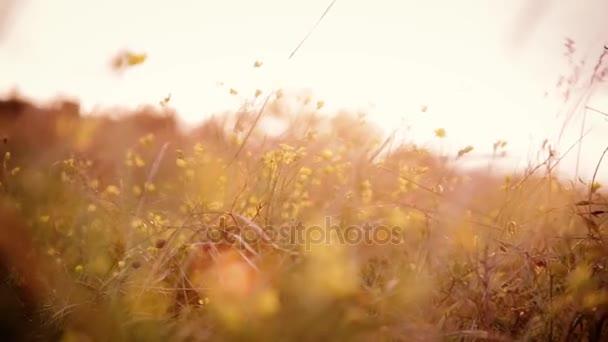 szántóföldi növények imbolygott a szél