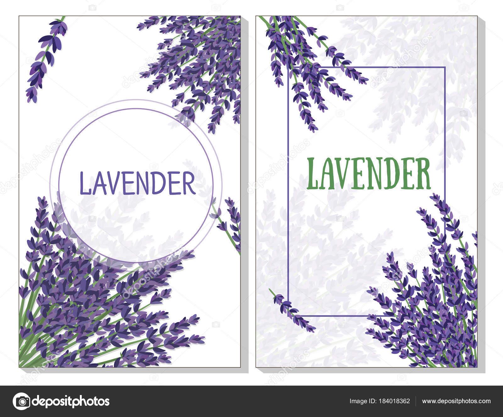 matorrales de lavanda sobre fondo blanco, patrón de tarjetas ...