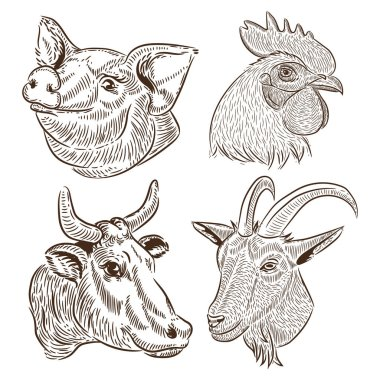 a set of portraits of farm animals. rooster, cow, goat, pig, vector