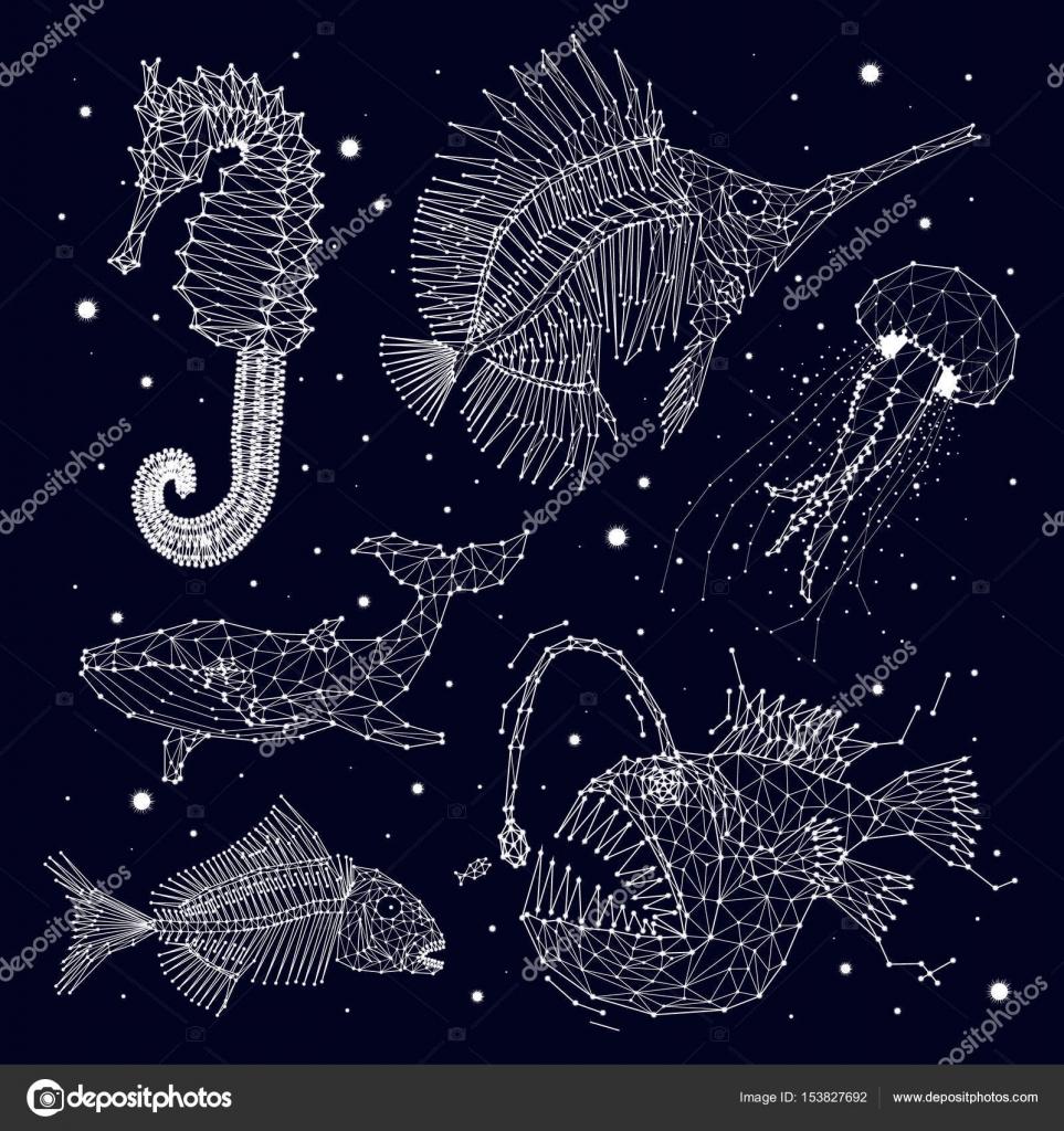 Esqueleto de peces, ballenas, medusas, cazador, depredador, caballo ...