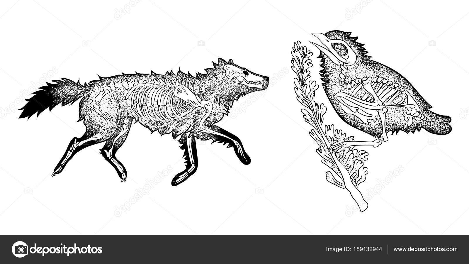 Grabado Estilo Vintage Retro Vintage Anatomía Del Esqueleto Animal ...