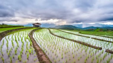 Timelapse of Terrace rice field of Ban pa bong piang in Chiangmai, Thailand.