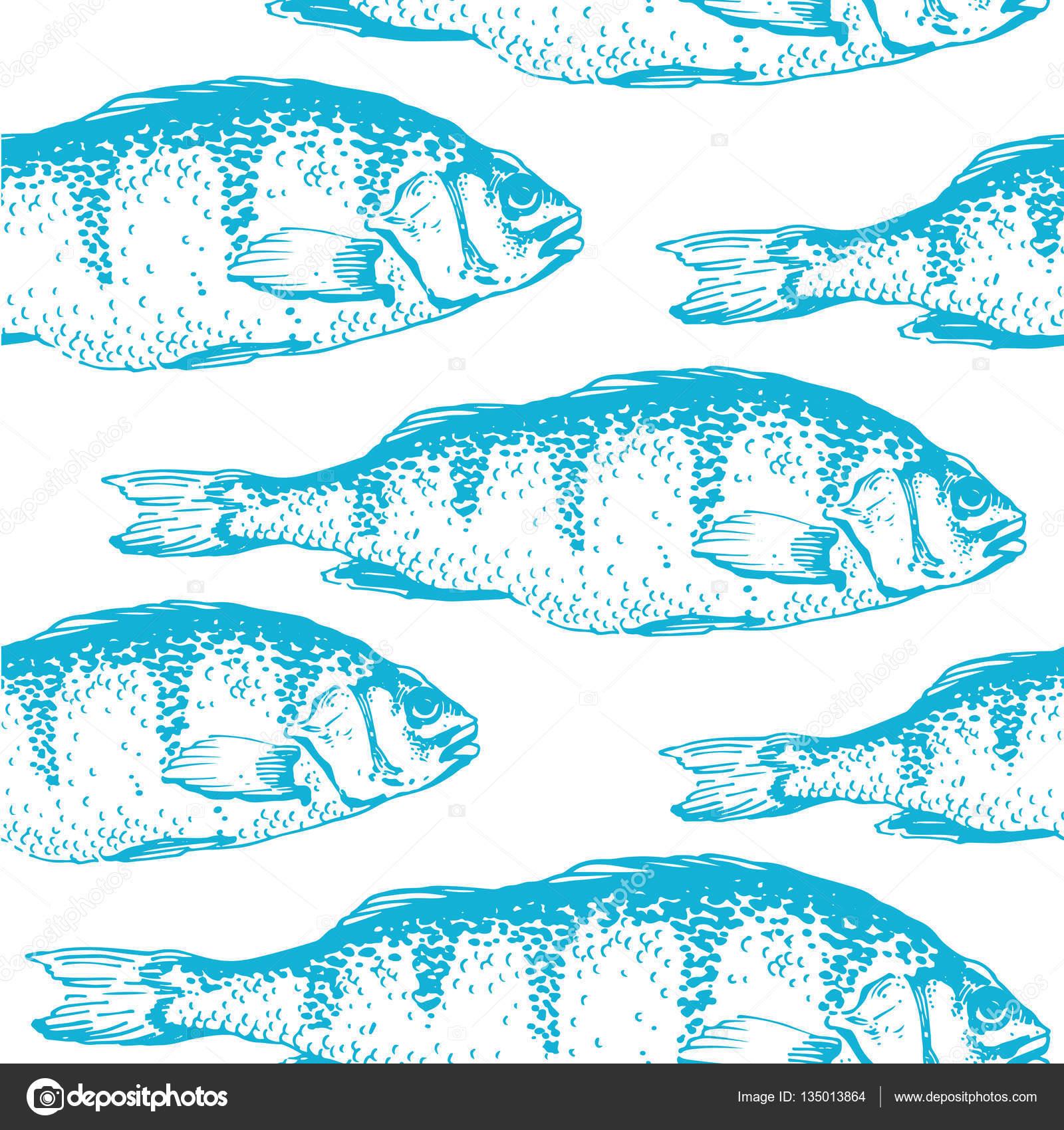 Ilustración de vector con bocetos de pescados de la carpa. Color de ...