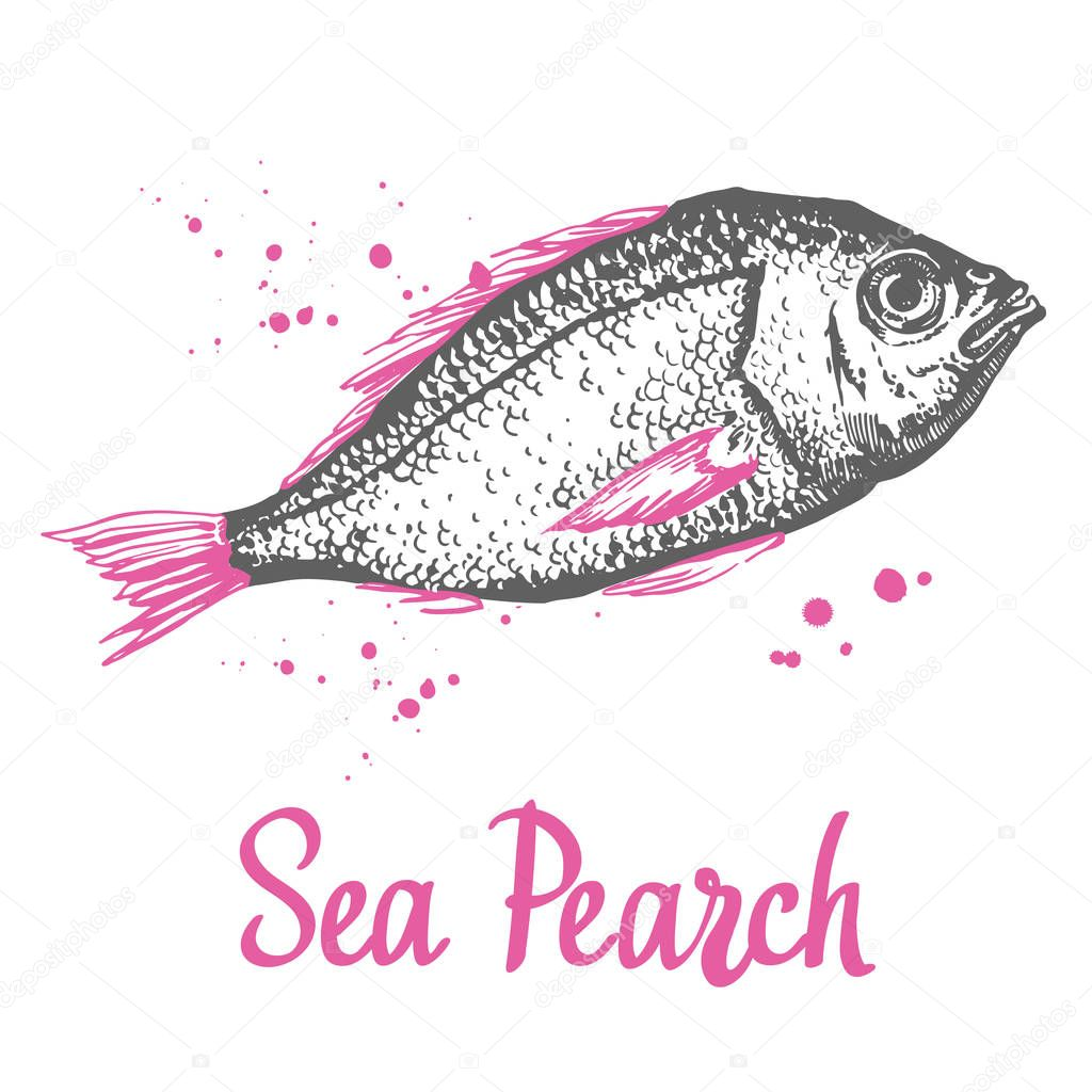 Hand drawn vector illustration with sketch sea pearch. Fish Market. Seafood menu. Brush design elements. Handwritten ink lettering.