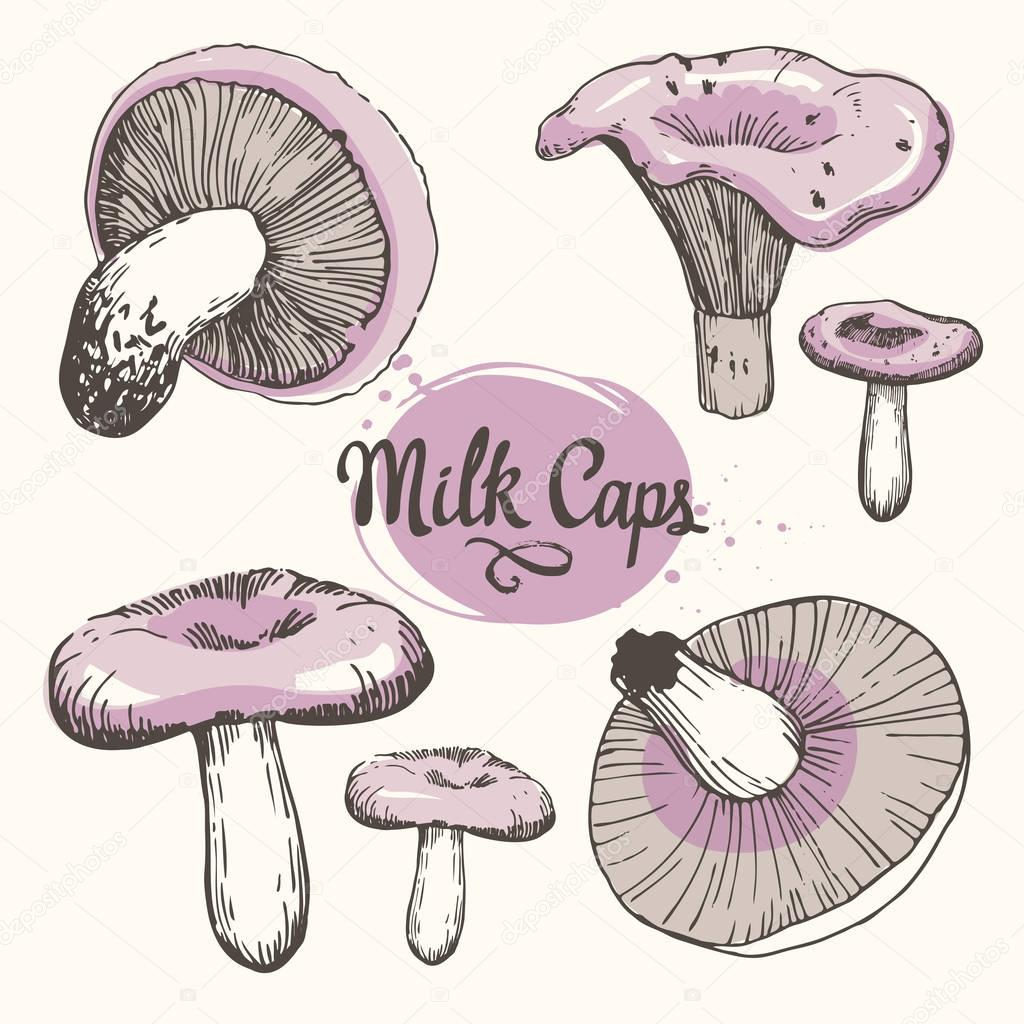 Vector illustration with set of mushrooms in sketch style. Hand-drawn milk caps on white background. Autumn forest harvest.