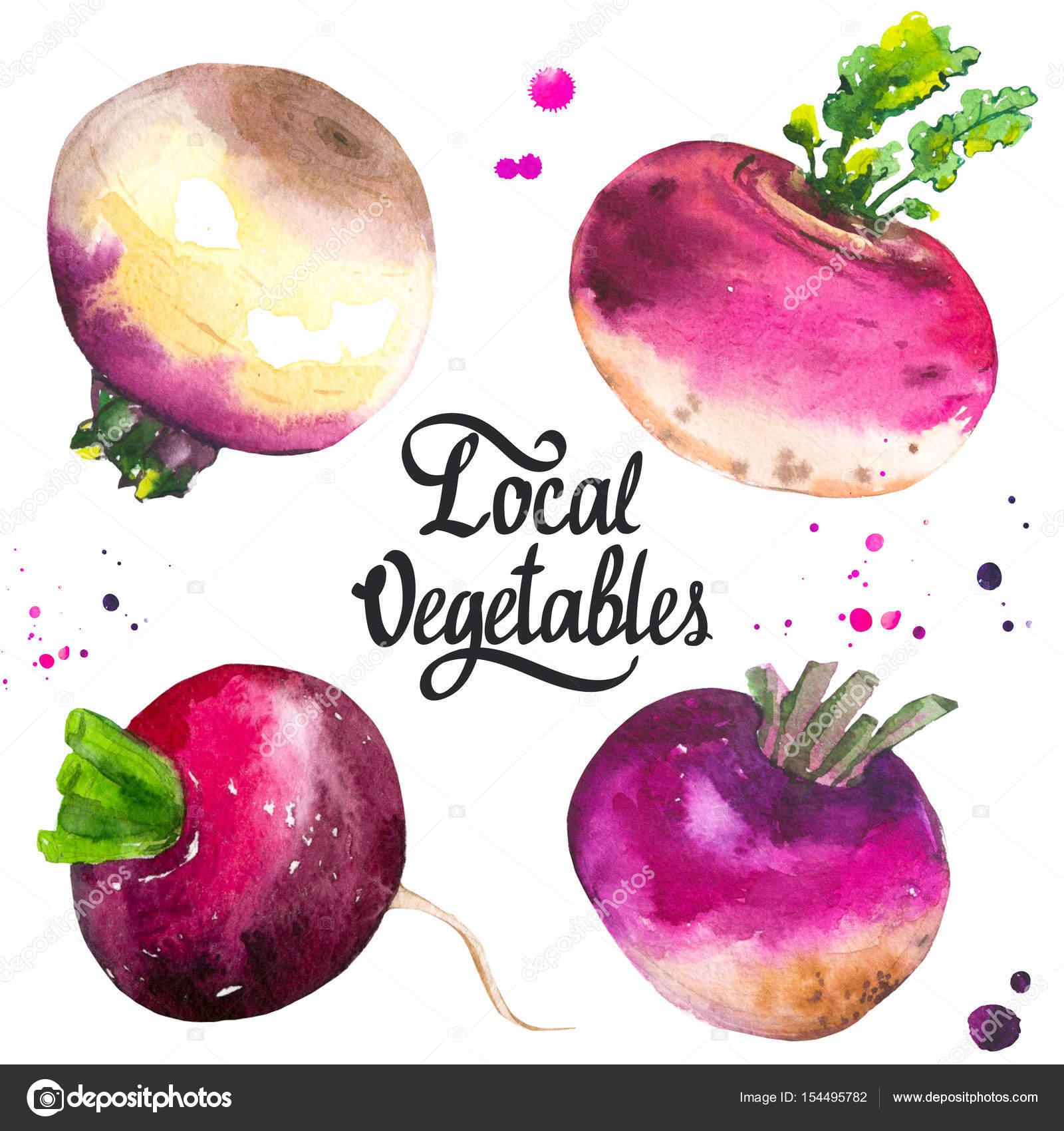Set mit verschiedenen Rüben und Rettich. Frische Bio-Lebensmittel ...
