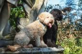 Fényképek A kilátás egy szobor talapzatán a fehér és a fekete kutya