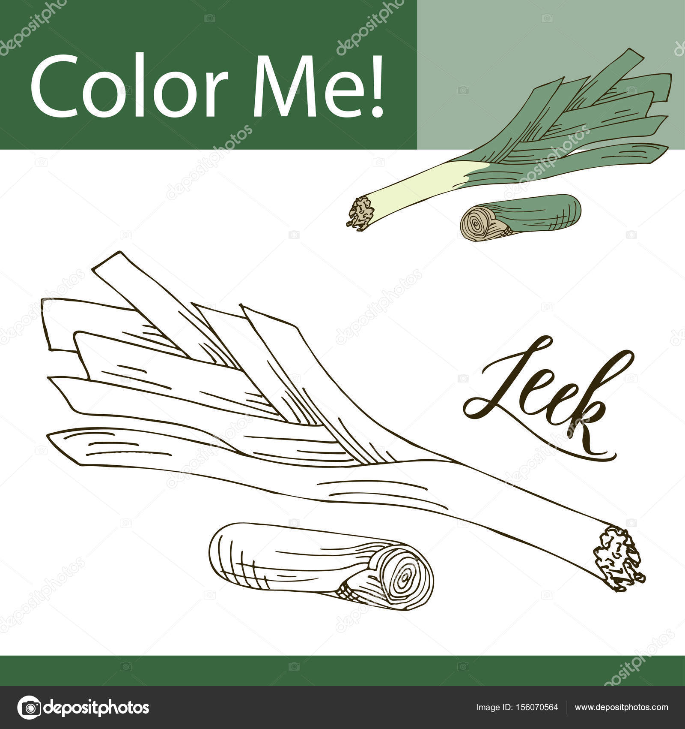 Sebze Ile Eğitim Boyama Sayfası Pırasa Vektör çizim El çekilmiş