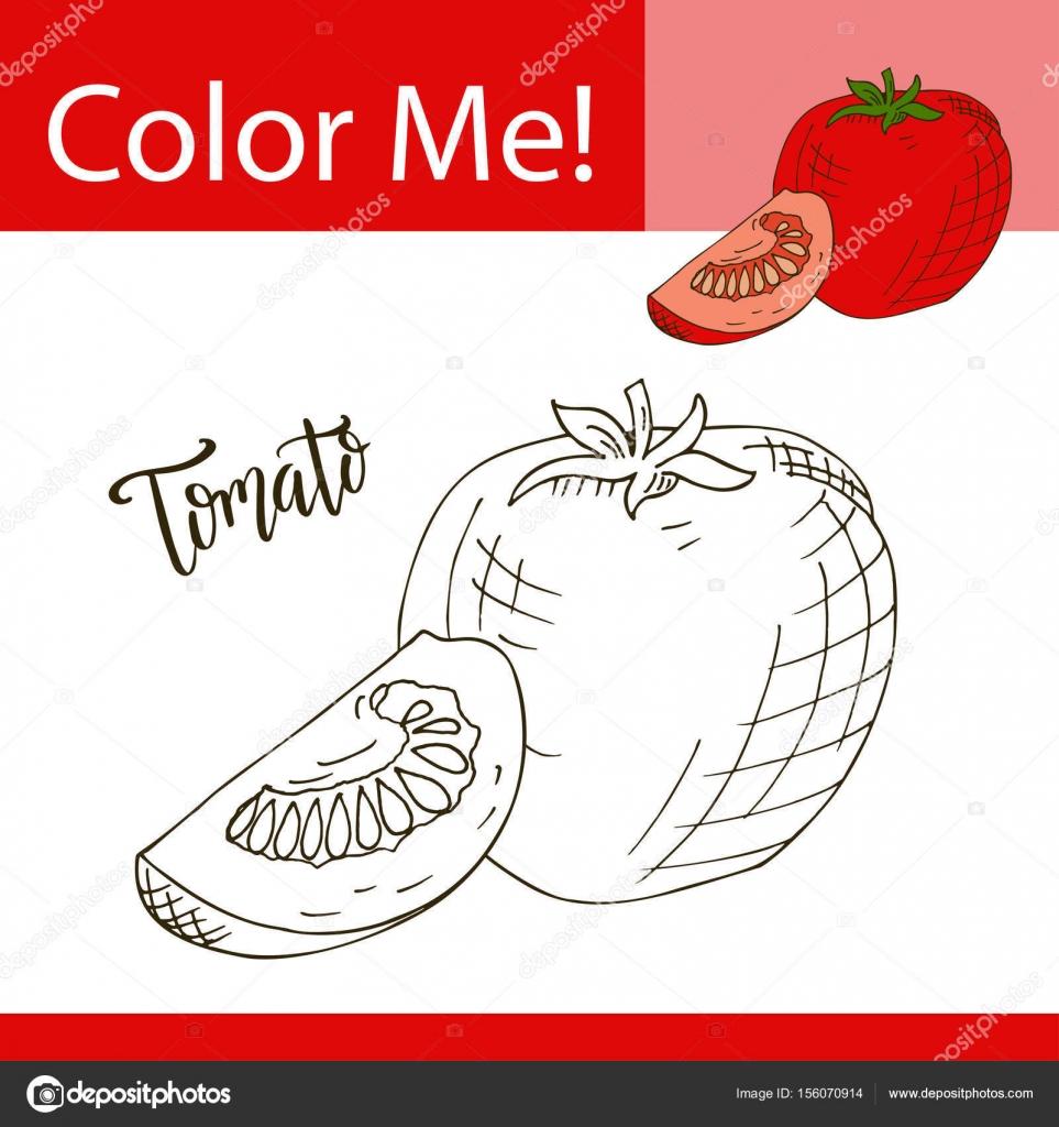 Sebze Ile Eğitim Boyama Sayfası Domates Vektör çizim El çekilmiş