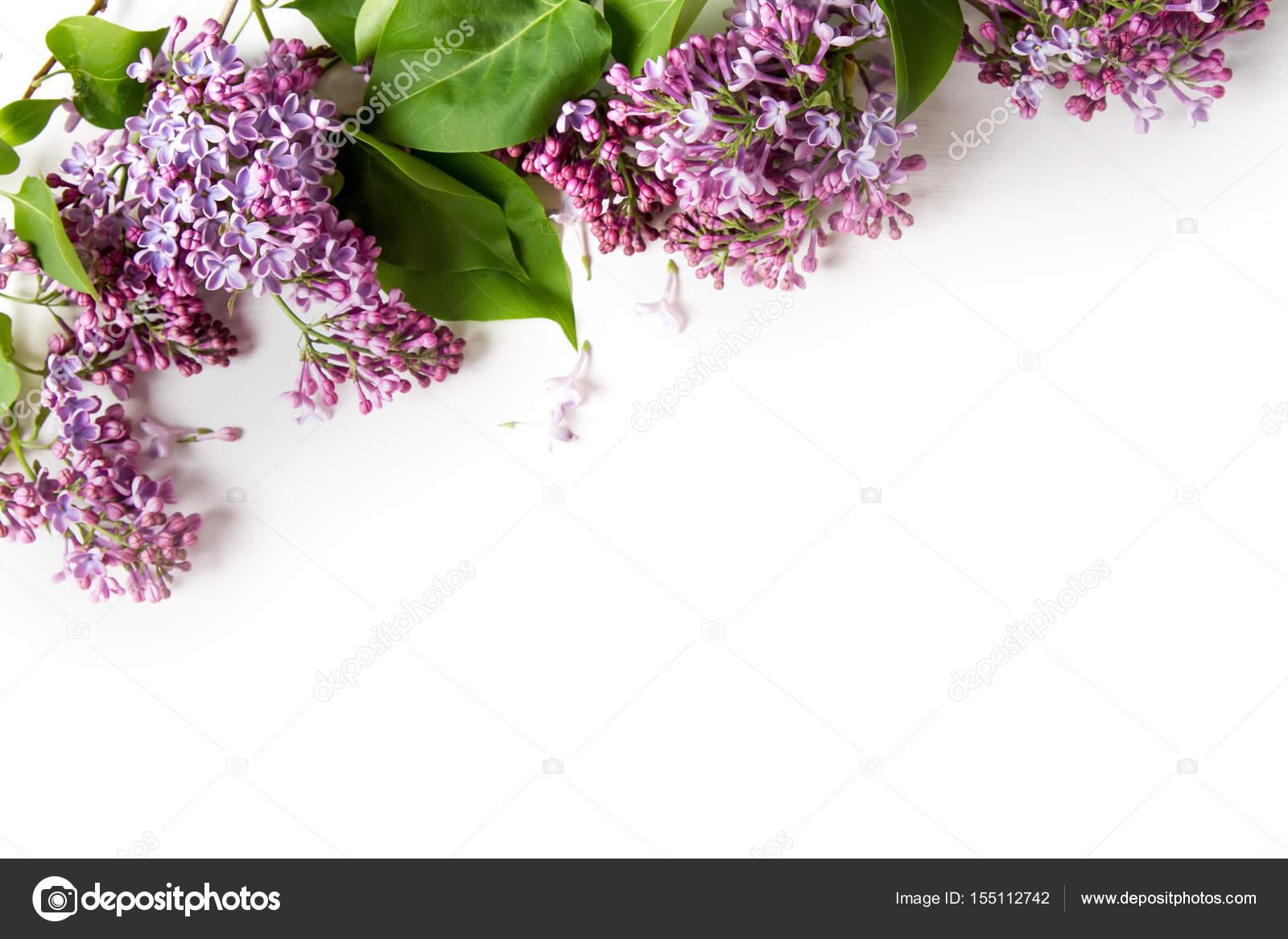 Flores Lilas Con Rosas Sobre Fondo: Fotos: Los Mejores Arreglos De Flores