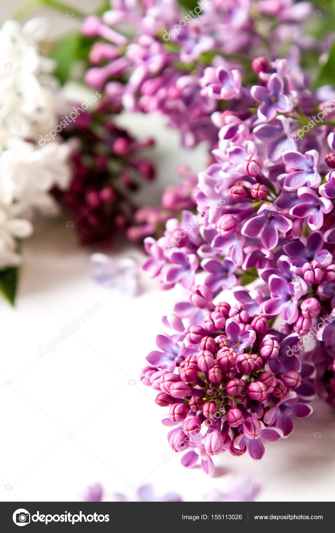 Spring Flowers Lilac Flowers On White Wooden Background Top Vi