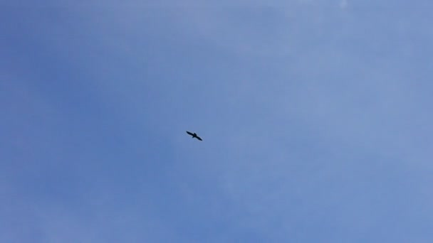 Bird soaring against blue sky and white clouds